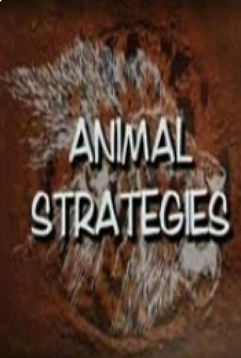 Animales estrategas.